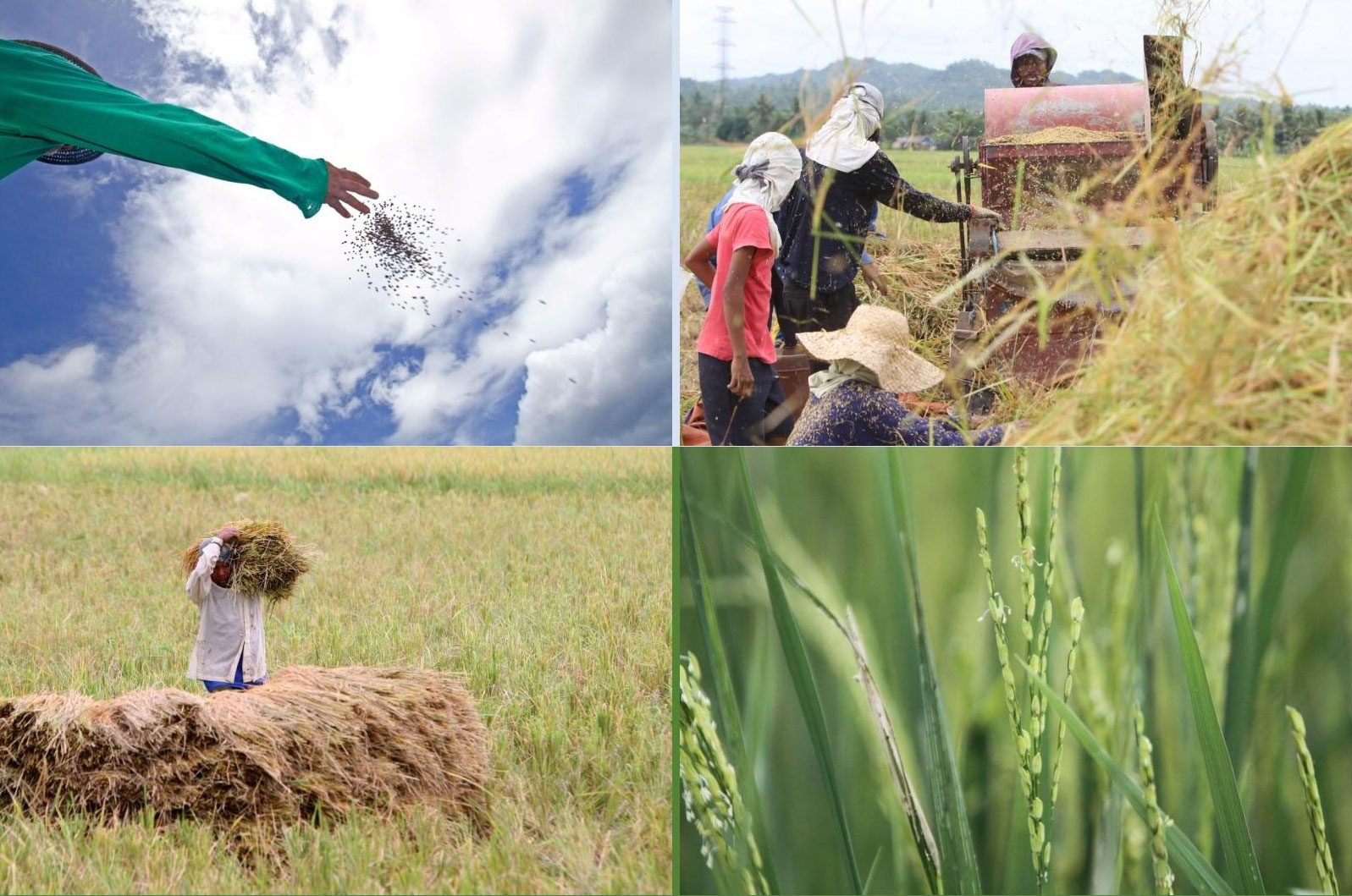 Better Rice Initiative Asia (BRIA): High-Quality Rice for Southeast Asia