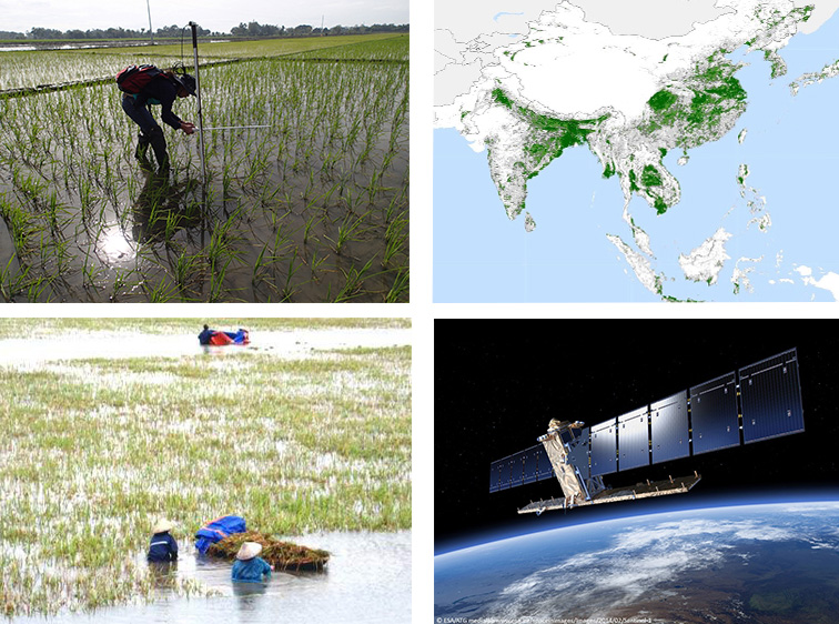Remote-Sensing based Information and Insurance for Crops in Emerging Countries