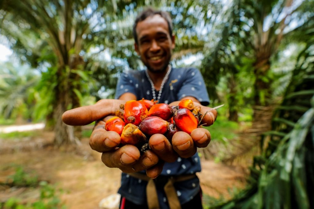 Sustainable and Climate-Friendly Palm Oil Production and Procurement (SCPOPP) in Thailand