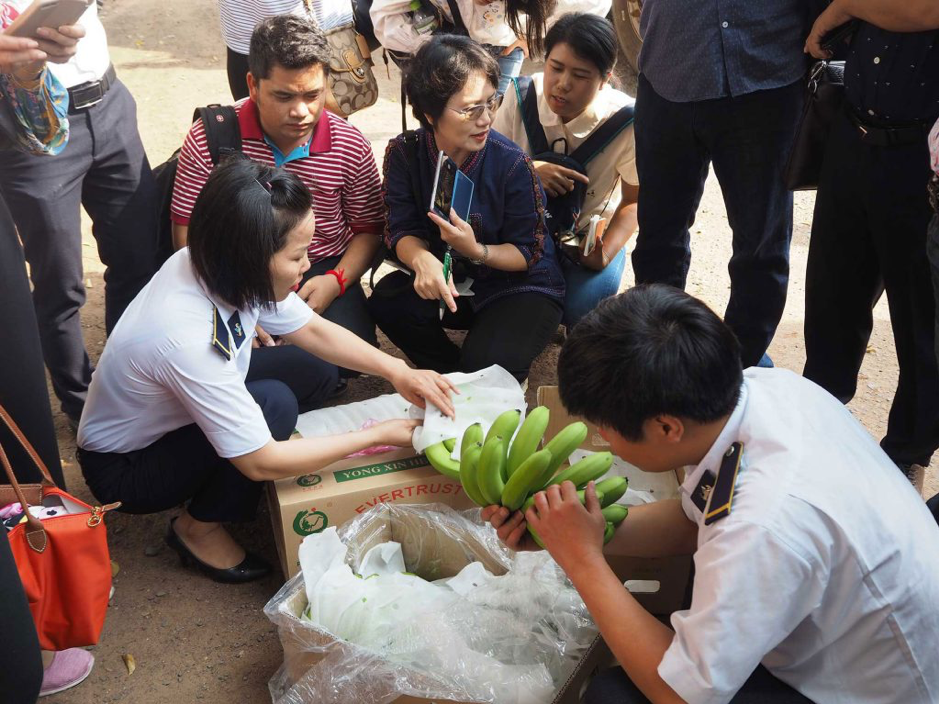 Inspectors from Cambodia, Thailand and Vietnam identify pests and symptoms of disease hidden in imported bananas at the quarantine checkpoint in Binh Phuoc province, Vietnam. (Photo credit: GIZ Thailand)