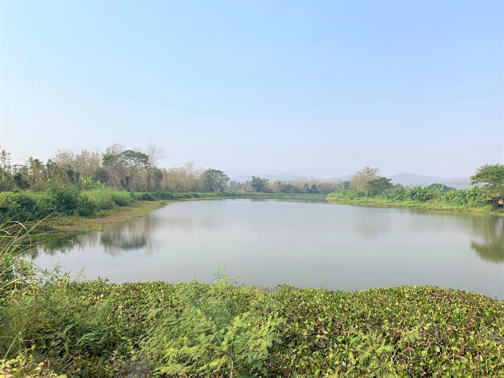 "Nong Mai, which is usually referred to by people in the area as Yom-Lhong (""Oxbow Lake""), is a large retention area located in Baan Tung Kaw sub-district, Phrae Province, that has become disconnected from the Yom due to past changes in the water flow. While the water body is 60 metres wide and 2.8 kilometres long, the peninsula it forms in the middle area is around 100 Rai or 160,000 square metres and is used for growing crops and vegetable gardens by the local community."