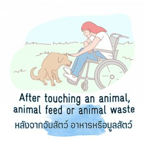 After touching an animal, animal feed, or animal waste
