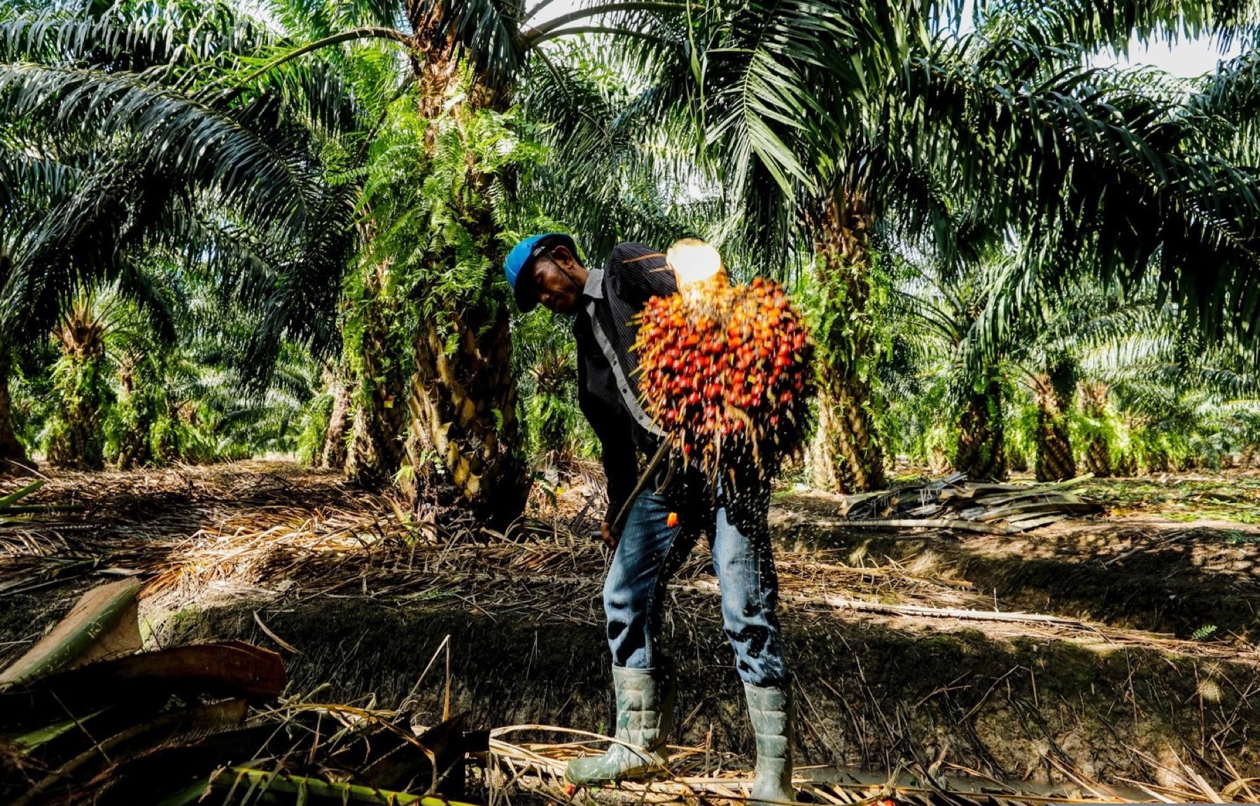 In Thailand, 79% of growers are small farmers. (Photo credit: GIZ Thailand)