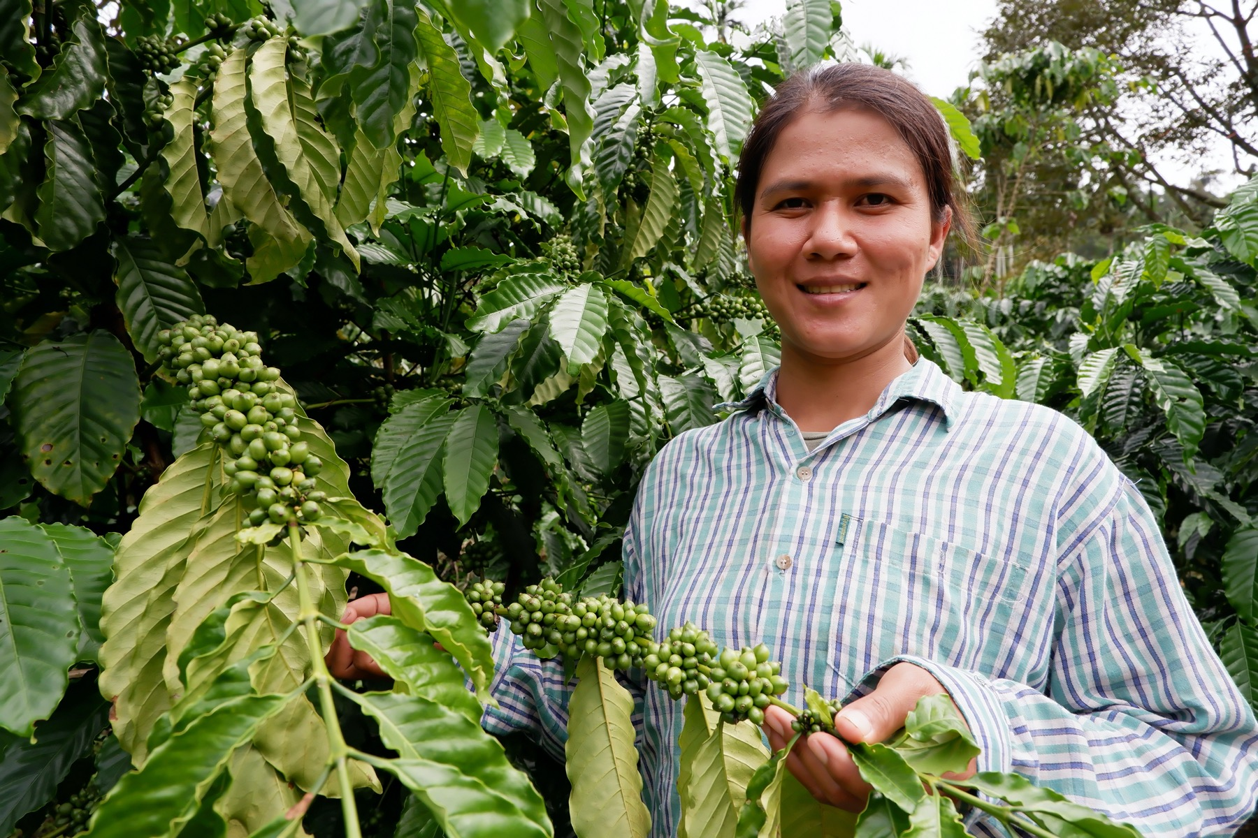 Changes in the fields of coffee